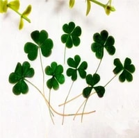 120pcs pressed dried heart clover flower for epoxy resin jewelry making nail art craft diy accessories