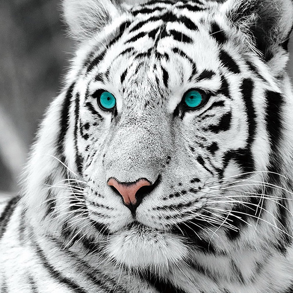 DIY 5D pintura completa de diamante pintura de punto de cruz tigre blanco bordado de diamantes kits de patrones de costura de diamantes de imitación