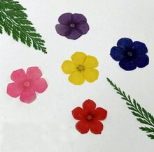 120pcs Pressed Dried 2.5cm Phlox Drummondii Flowers Plant Herbarium For Jewelry Craft Phone Case Postcard DIY Making Accessories