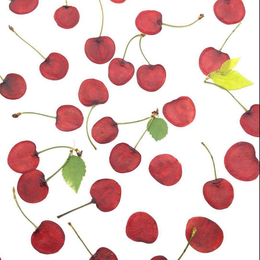 20 piezas secas prensadas 1,5-2 cm frutas cereza rebanadas herbario de plantas para foto de joyería marco teléfono estuche artesanía DIY hacer accesorios