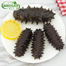 Eau grand concombre de mer modèle de fruits de mer   Décoration à motif de nourriture de fruits de mer