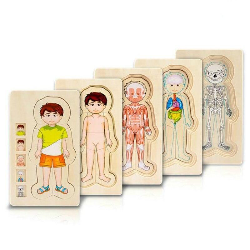 Montessori Holz Multi-schicht Puzzle Menschlichen Körper Puzzle Jungen Mädchen Körper Struktur Holz Puzzles Kinder Pädagogisches Holz Spielzeug