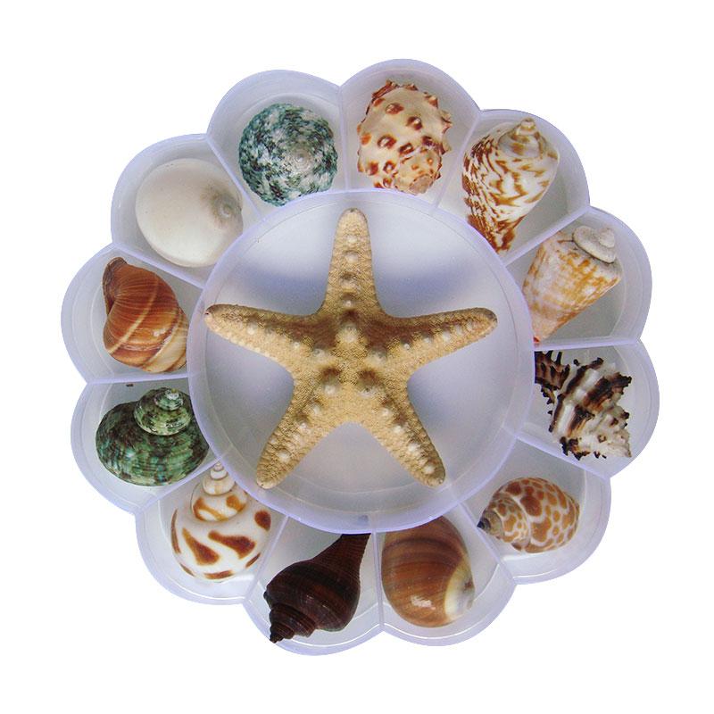 Природные раковины Раковины Морская звезда образцы Подарочная коробка для детей морские биологические науки материалы детский сад подаро...