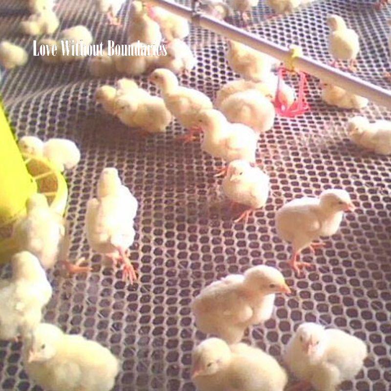 Alfombras y mantas para mascotas, cama limpia, alfombra para pájaro, gallina, pato, hámster, visón, ardilla, cama, nido de pollos, patos, roosters, almohadilla de red hueca para gallinas