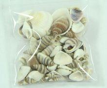 50Pcs Various Shells Snail Sea Shell Natural Seascape Home Garden Miniatures Micro Landscape Shell