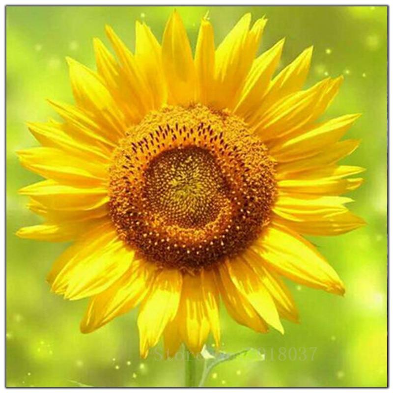 5D Diy Diamond Painting Cross Stitch Sunflower Under The Sun Needlework 3D Diamond Embroidery Full Round Mosaic Decoration Resin