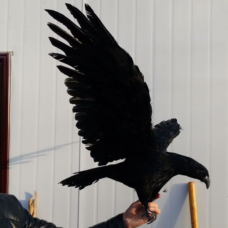 balck big simulation eagle model foam&furs wings eagle gift about 100x45cm 1240