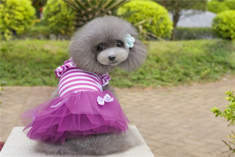 Y04 Sweety vestido para perro pequeño lindo perro mascota cachorro raya lazo encaje Tutu vestido princesa falda para mascotas para Chihuahua Yorkshire