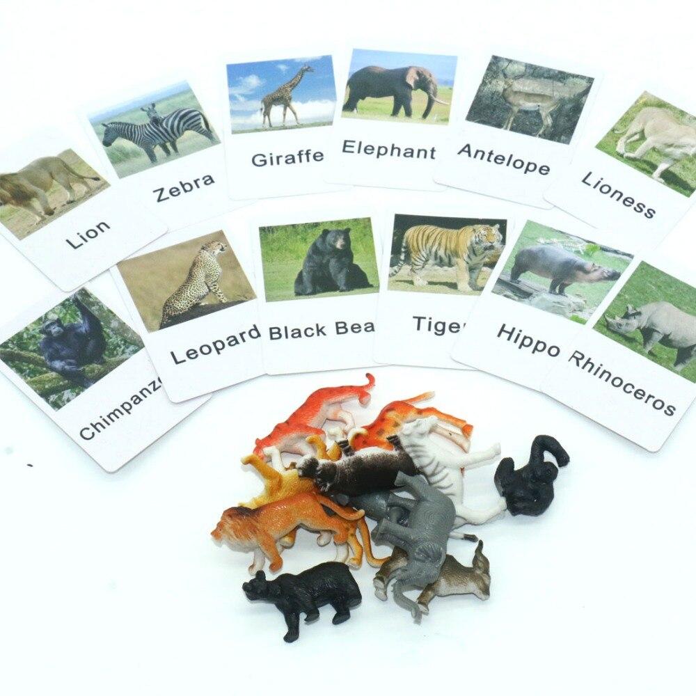 Material de idioma preescolar, tarjetas a prueba de agua, PVC, África, Animal, juego de tarjetas a juego, Juguetes educativos para niños, Juguetes YB0264H