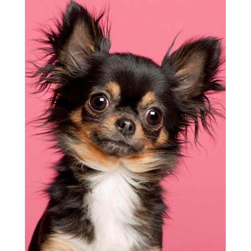 5D DIY Алмазная вышивка милая маленькая собака Алмазная картина крестиком полный квадратный горный хрусталь мозаика украшение для дома подар...