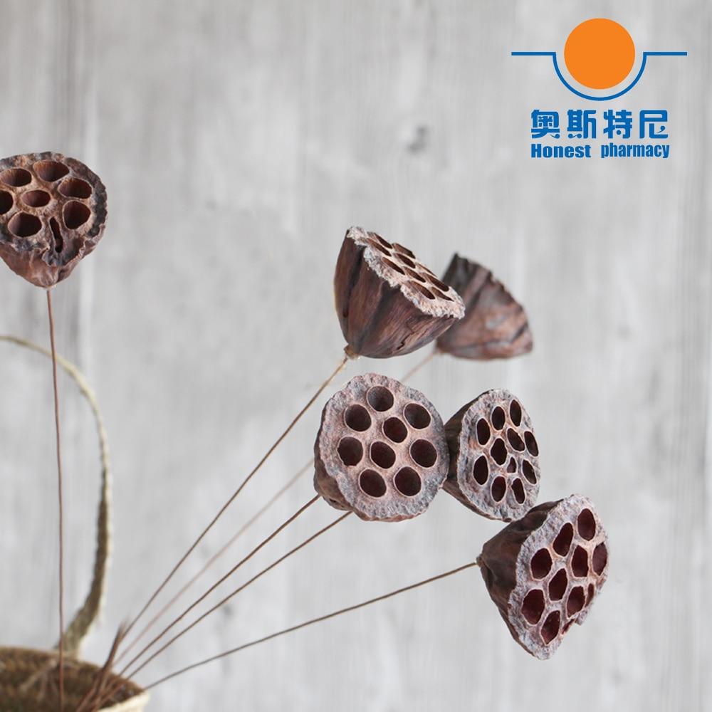 5 pçs secaram naturalmente buquês de flores tamanho pequeno naturalmente dired lotus seedpod & seedpod do lótus sem semente