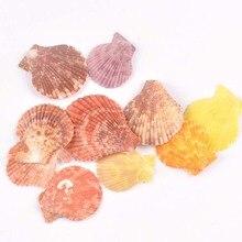 Pas de trou secteur coquille naturelle bricolage décoration de plage pour la maison Scrapbook coquillages artisanat fait main accessoires 10 pièces 35-50mm TR0221