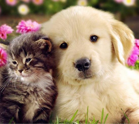 100% 5D Diy pintura de diamantes de imitación «gato y perro» pintura de diamantes redondos 3D pintura de diamantes de imitación bordado de animales regalo para niños