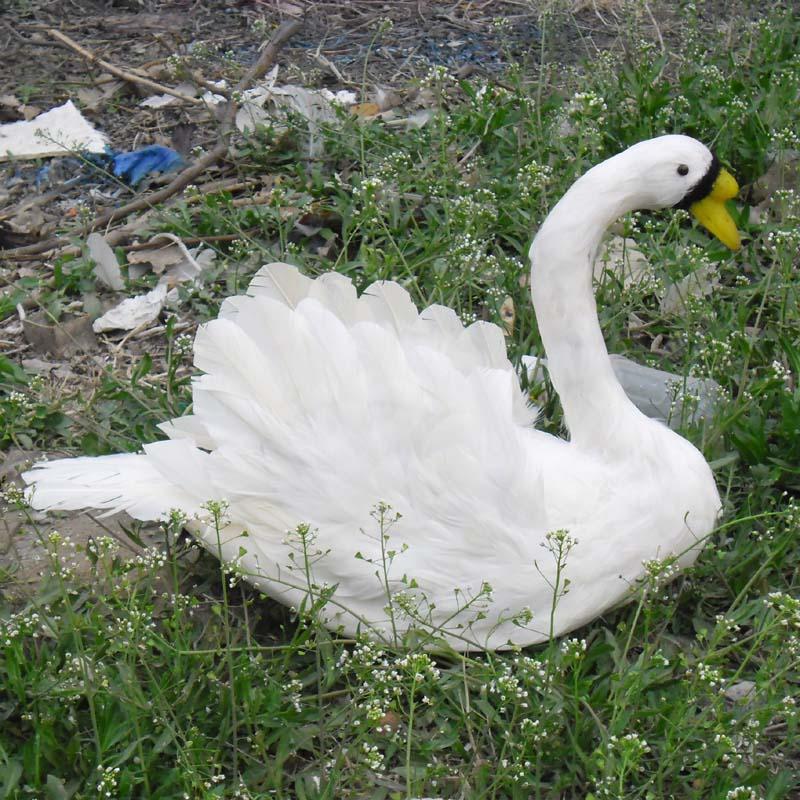 Bonito cisne blanco de juguete de simulación de espuma y plumas hermosos adornos de cisne regalo cerca de 30x40cm 0816
