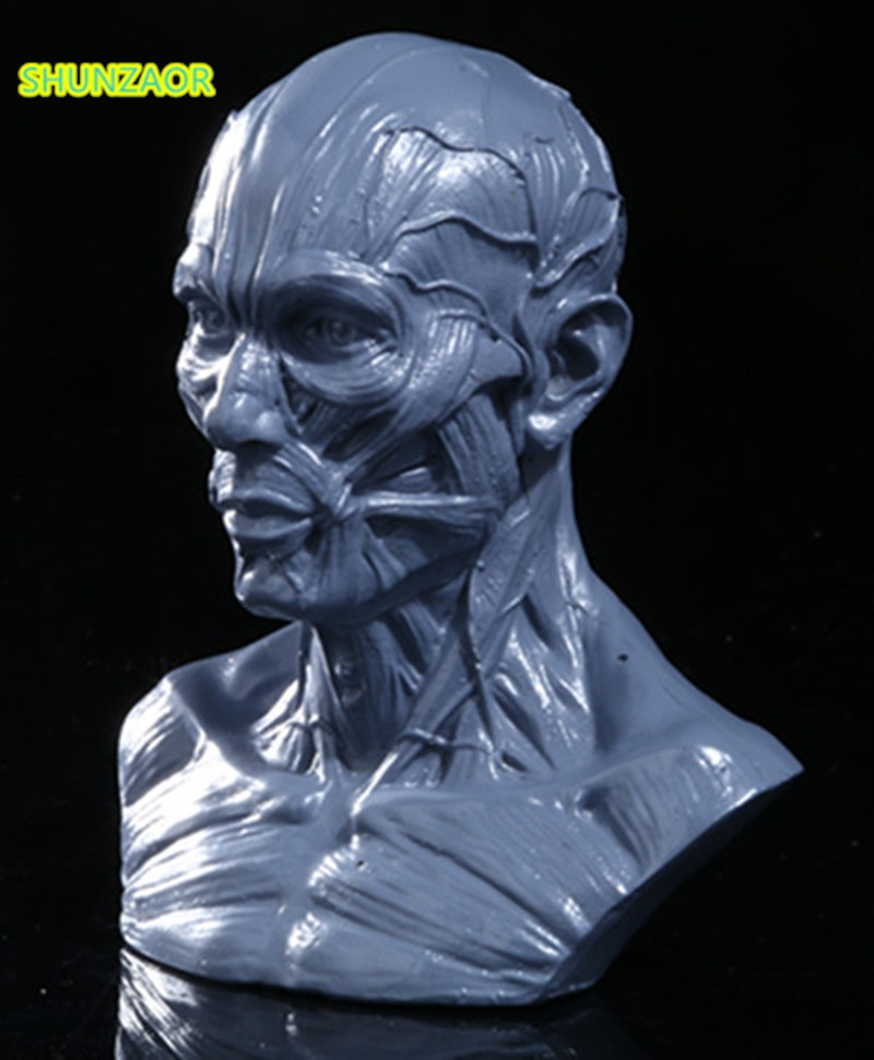 Resin Simulation Muscle Skull human skeleton anatomical model skeleton Skull Head Muscle Bone Artist Drawing teaching tools