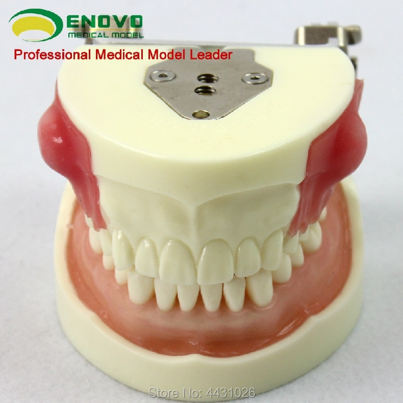 ENOVO Oral practice examination abscess incision and tooth preparation model alveolar abscess incision drainage
