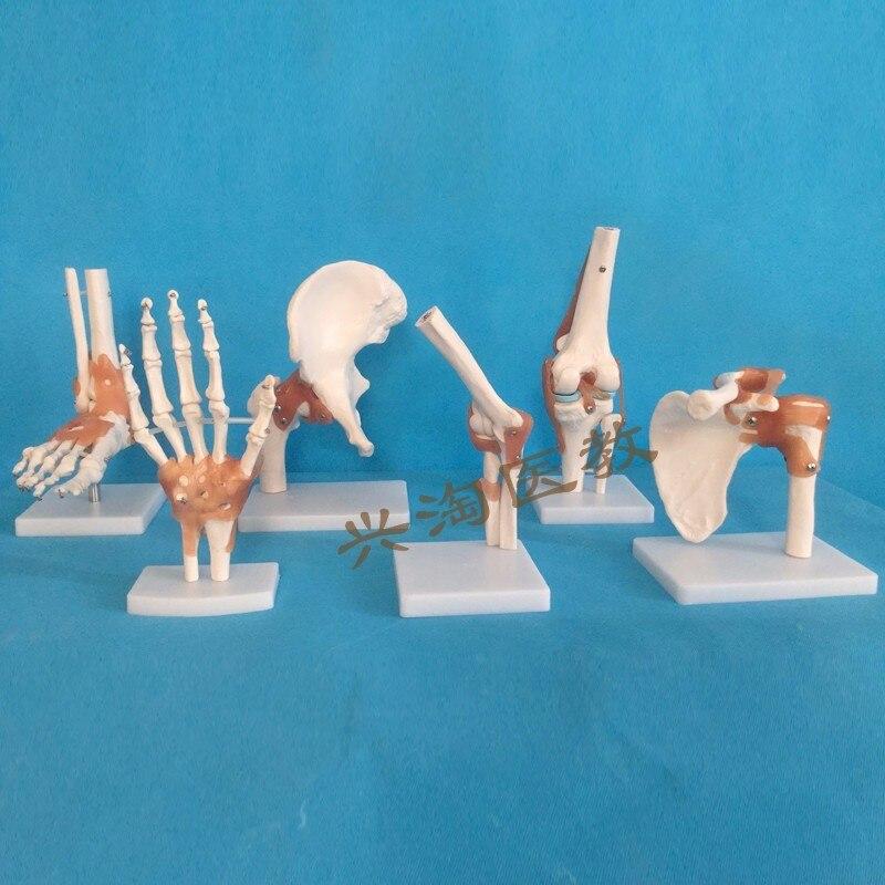 6 uds modelo esqueleto articulación hombro, codo, muñeca, cadera, rodilla y tobillo modelo de articulación humana esqueleto