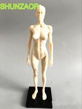 30cm blanc humain femelle modèle anatomie crâne tête Muscle os artiste médical dessin squelette à vendre