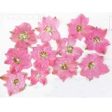 12pcs per bag Different Pink Color Larkspur DIY Pressed flowers Bouquet cell phone case wholesale Free Shipment