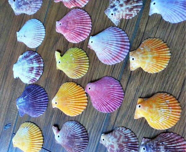 HappyKiss 50 шт./лот, натуральный раковины, разноцветное украшение для дома, романтический резервуар для рыбы baileyi, ваза, аксессуары для поделок