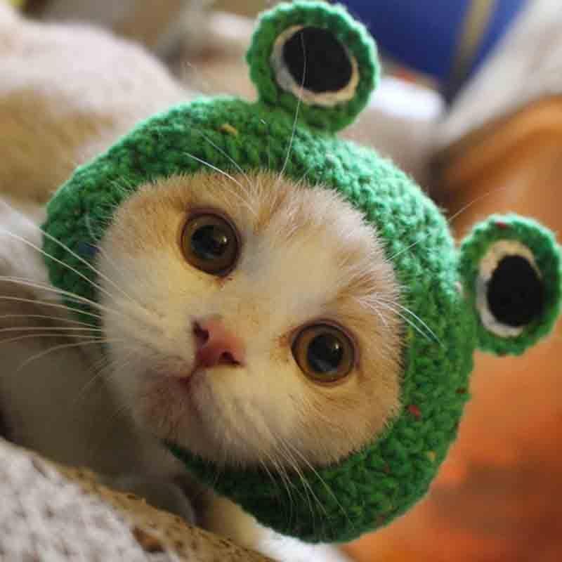 Traje de fiesta de perro gato con forma de rana bonita para Bichon Chihuahua invierno cálido perro divertido gato gorra para mascotas