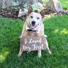Autocollant en vinyle pour signe de chien de mariage   Décoration pour accessoires de mariage, autocollants signes de fiançailles, décoration pour animaux domestiques
