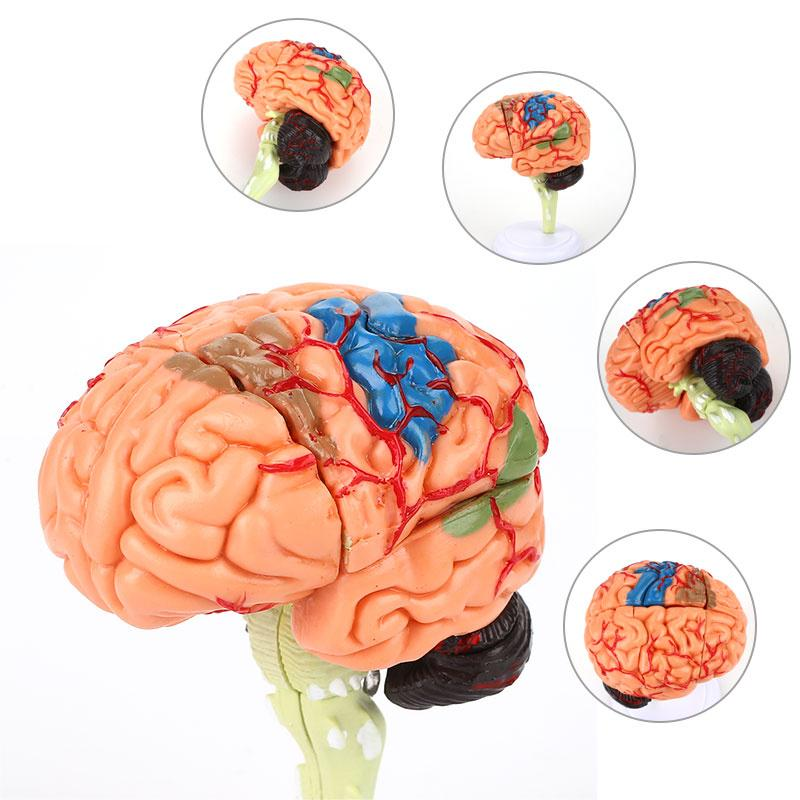 4D диссобранный анатомический мозг, модель образовательной формы для школы человека, медицинская модель мозга, обучающий инструмент