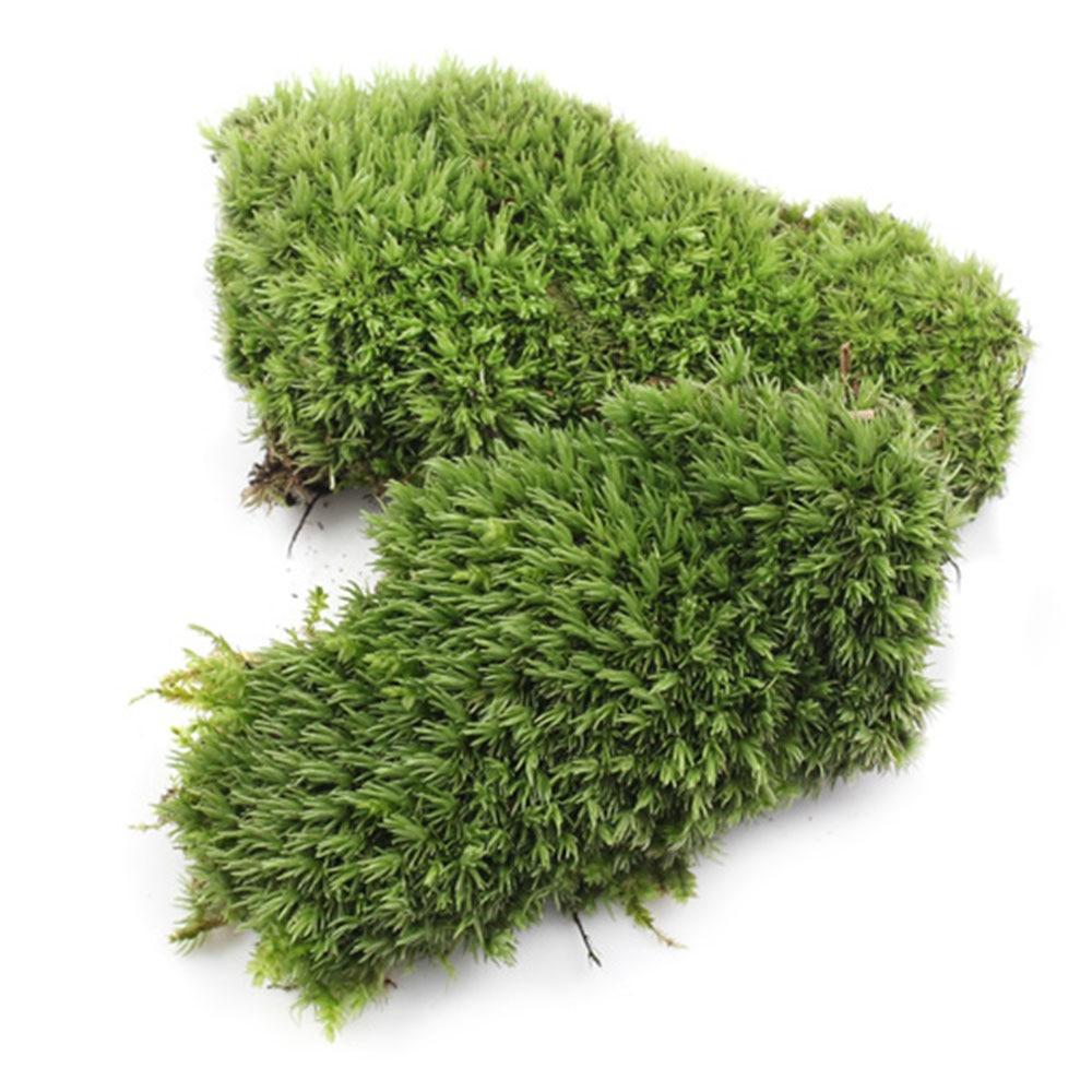 2pcs Green Artificial Fake Moss Coral Stone Model Grass Plant Potted Micro Landscape Fairy Garden Aquarium Ornament Decoration