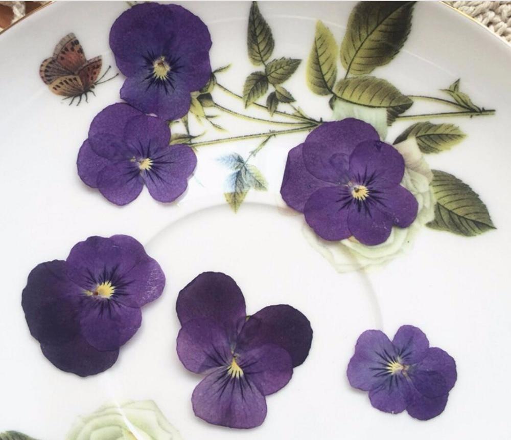 120 Uds. Polvo seco prensado púrpura pensamiento Corydalis Suaveolens Hance FLORES PLANTAS herbario para joyería Fabricación de pendientes colgantes