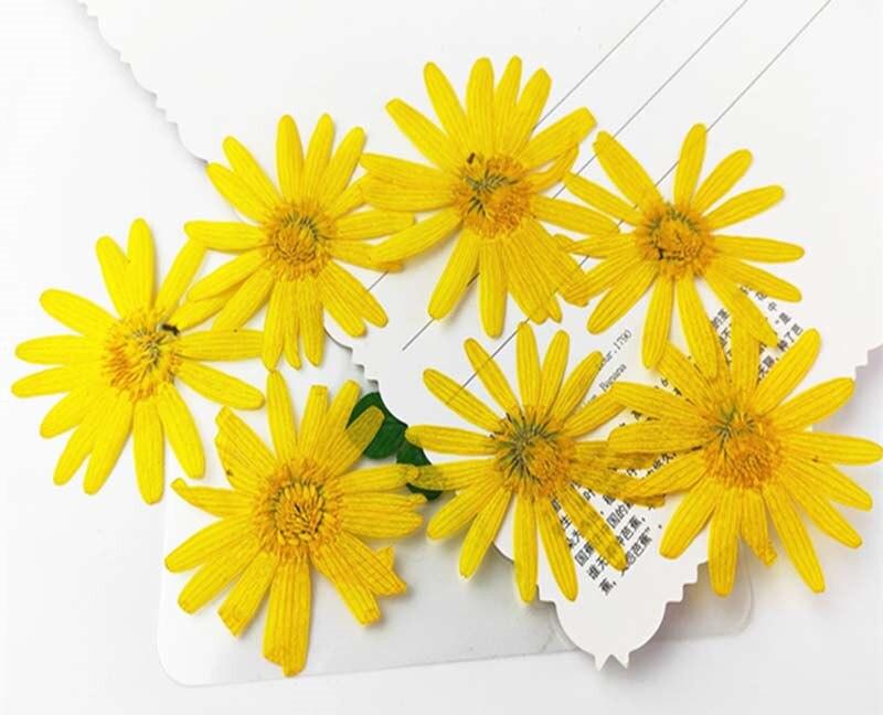 Flores doradas secas de crisantemo para pintar flores DIY marcapáginas envío gratis 80 Uds