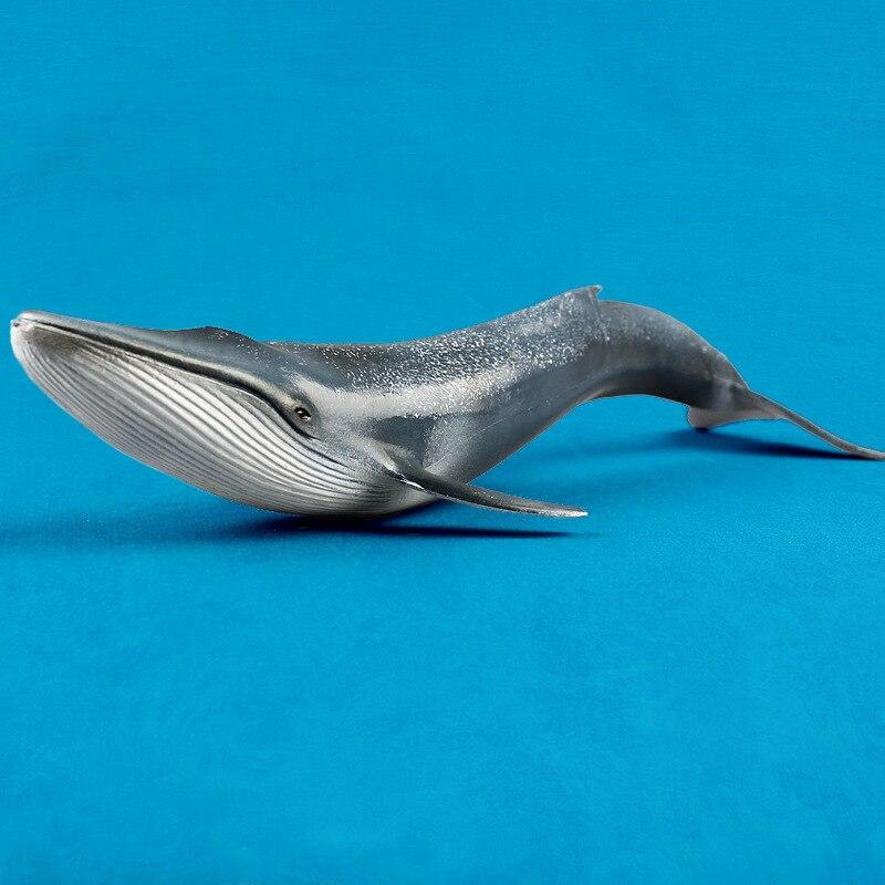 Cuerpo Marino Ballena Azul modelo emulación Vida Marina animales monstruo educación temprana juguetes colección regalo decoración para niños 27CM