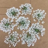 Fleurs pressees en dentelle Minoan  120 pieces  1 paquet 10 sacs  veritables echantillons de plantes naturelles pour decoration dongles gemmes  cadeaux