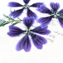 Pourpre Hollyhock bricolage fait à la main matériel réel fleurs séchées 1 lot/120 pièces en gros livraison gratuite