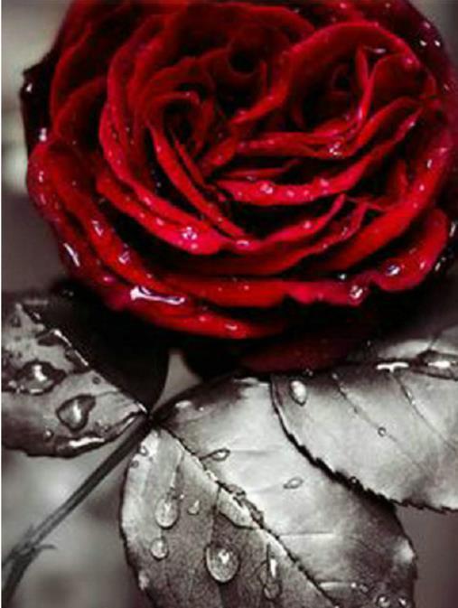 Pintura de diamante rosa roja, rompecabezas bordado de diamantes 5d, flor, pintura de diamantes 5d decoración completa de diamantes