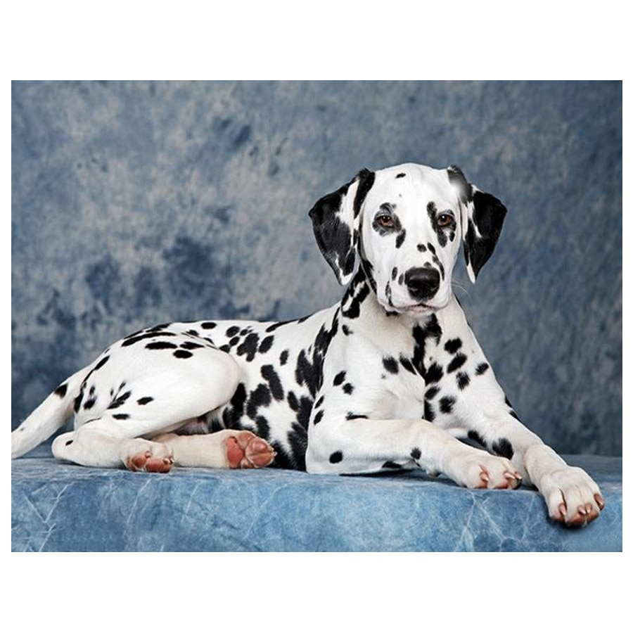 Diamond Embroidery Dalmatian dog Pet Animal Cross Stitch Full Display Drill Mosaic 5D DIY Square/Round Rhinestone Art YG568