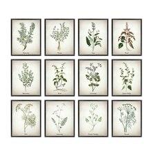 Herb arte da lona pintura vintage herbal ilustrações posters e cópias culinária ervas botânicas cozinha arte da parede imagem decoração
