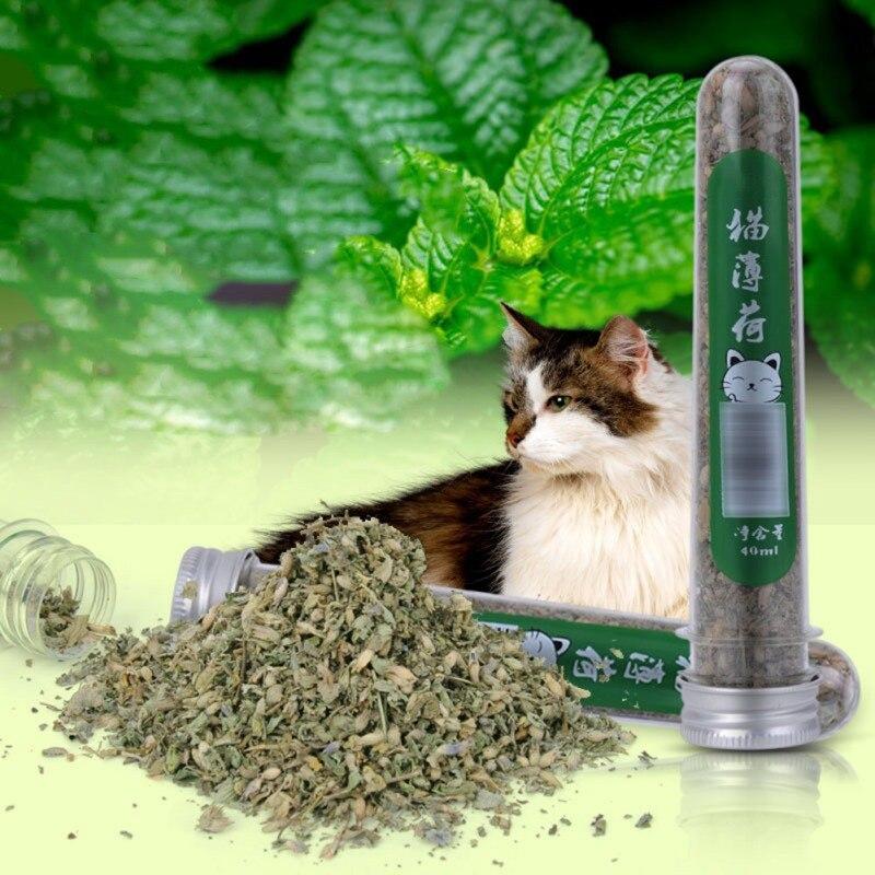 Cataire bio frais séché 40ml   Fleur de chat, Nepeta, feuille de Cataria pour Gatos W1