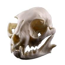 Lucky Cat Skull Resin Statuette Skeleton Model Aquarium Fish Tank Landscape Decoration