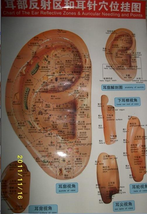 Envío Gratis Ex-b2 wallmap Mapa de acupuntura Mapa de utración de puntos de acupuntura mapa gancho de oreja zhaohao ex-b2