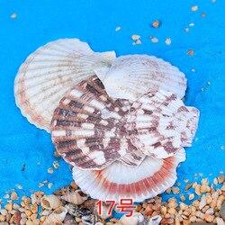 10-30 pc conjunto de parede de aquário fotografia vendendo conchas de peixe caracol de cera tanque de peixes mundo marinho diy artesanato decoração para casa dados