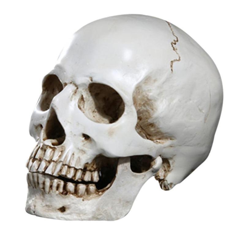 Testa umana Replica Resina Diviso 3D Cranio Stampo per Halloweeen Decorazione Del Partito FAI DA TE Stregata di Halloween Del Cranio di Casa Forniture