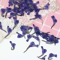 120pcs pressed dried consolida ajacis l schur flower plants herbarium for jewelry making postcard frame phone case craft diy