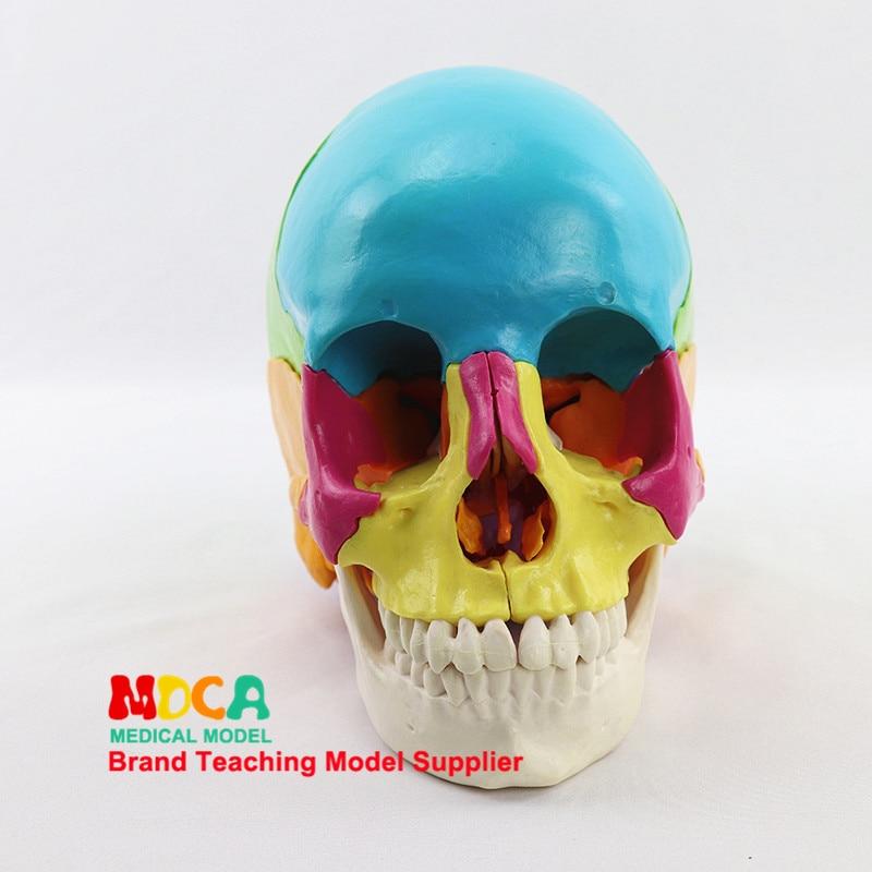 Medical Split 22 Components 1:1 Human Color Skull Model Skull Skull Medical Teaching MTG013