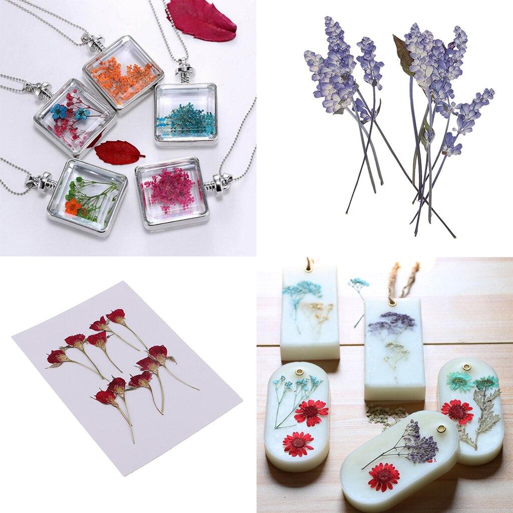 20x prensado y secado de flores de salvia para DIY funda de teléfono, marcapáginas, joyería de resina