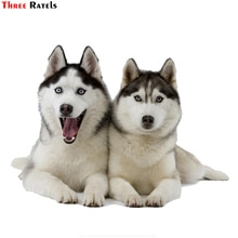 Trois Ratels TRL532 #14x10.5 cm Deux huskies chiens drôle autocollants de voiture de voiture autocollant drôle de voiture autocollants et stickers