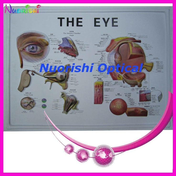 E4604  eyeball   eye model    plastic eyeball    English and Chinese detailed instruction   lowest shipping costs !
