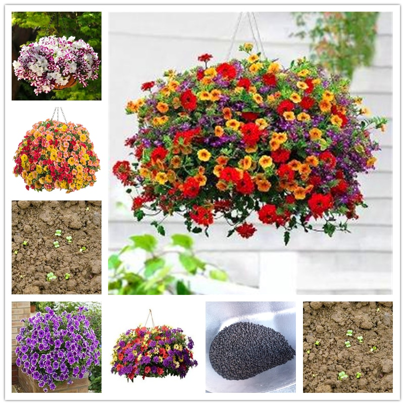 50Pcs Perfume Petunia Seeds Bonsai Garden Flower Nature Plants Home Fragrant Colorful Petunia Hybrida Essence Lip Mask NB-0