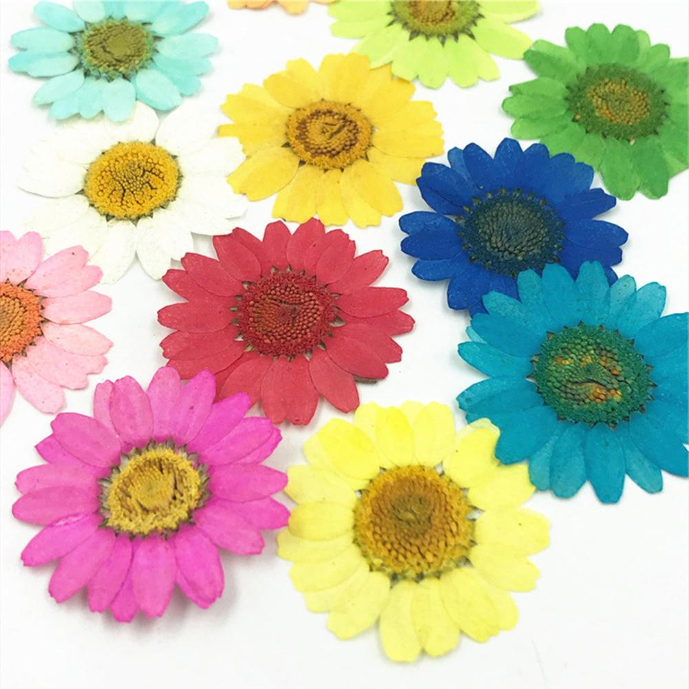 12 stücke Natürliche Gedrückt Dekorative Getrocknete Blume Material Künstliche Getrocknete Blumen DIY Schmuck Machen Telefon Fall Zubehör