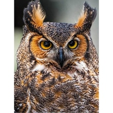 Diy Diamond Painting Owl Diamond Mosaic Embroidery Animal Diamond Cross Stitch Picture Of Resin Modern Home Decor painting