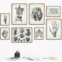 anatomy skeleton foot brain heart skull vintage art canvas painting nordic poster and prints wall pictures doctor office decor